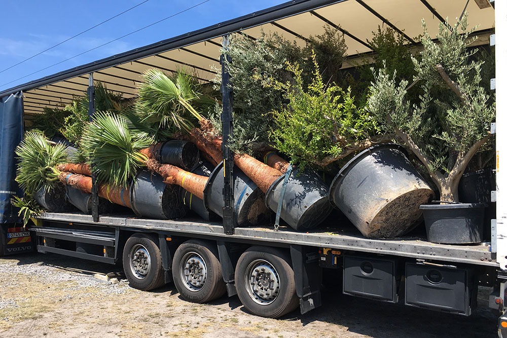 Des palmiers et des oliviers à Arcachon : L'arrivage du mois de juillet!