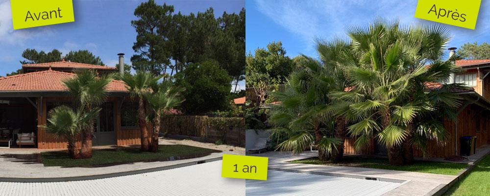 palmier-arrosage