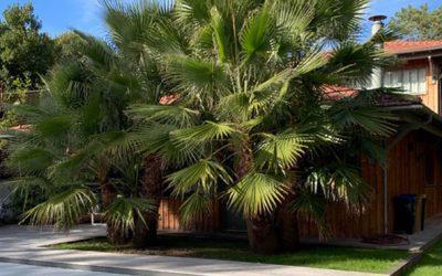 Planter un palmier : les 6 astuces qui changent tout!
