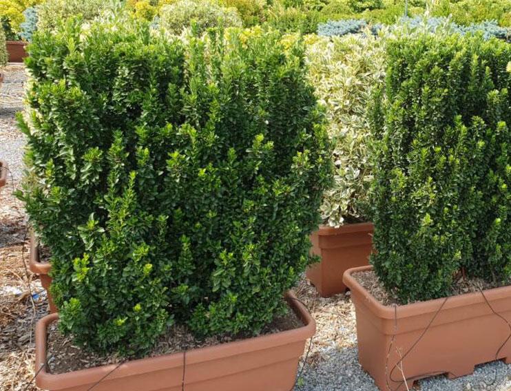 jardinieres-pretes-terrasses