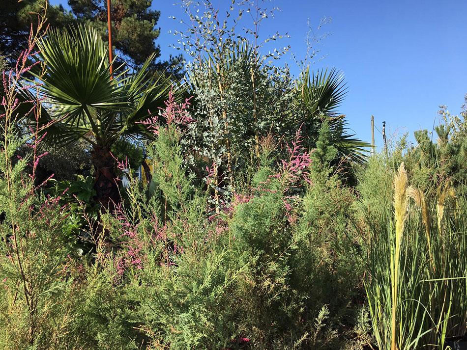 6-plantes de jardin