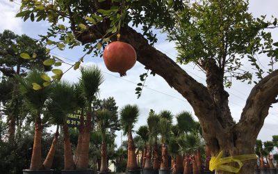Des plantes originales et des palmiers à foison, à Arcachon!