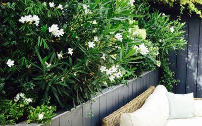 Arbustes pour haie de jardin : nos 5 conseils avant de se lancer