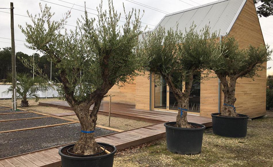olivier-pot