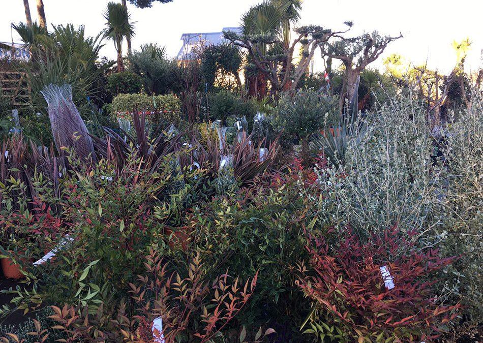 Un nouvel arrivage vous attend dans votre jardinerie préférée d'Arcachon!