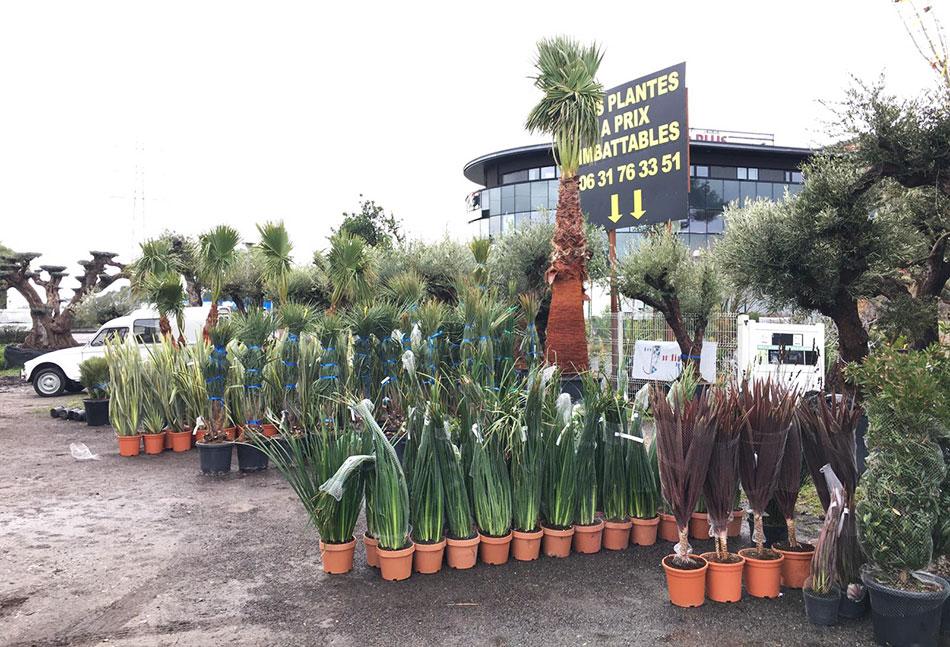 1-arrivage-plantes-Arcachon