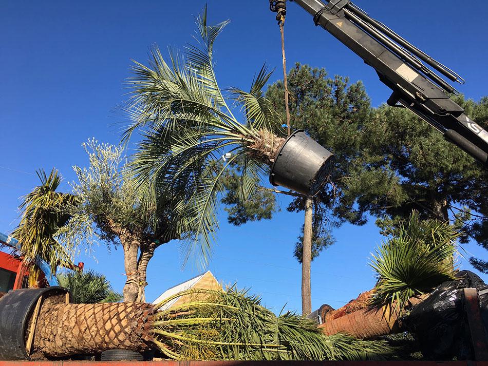livraison-palmier-Arcachon