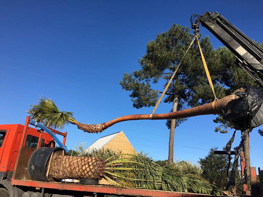 livraison-palmier-exception