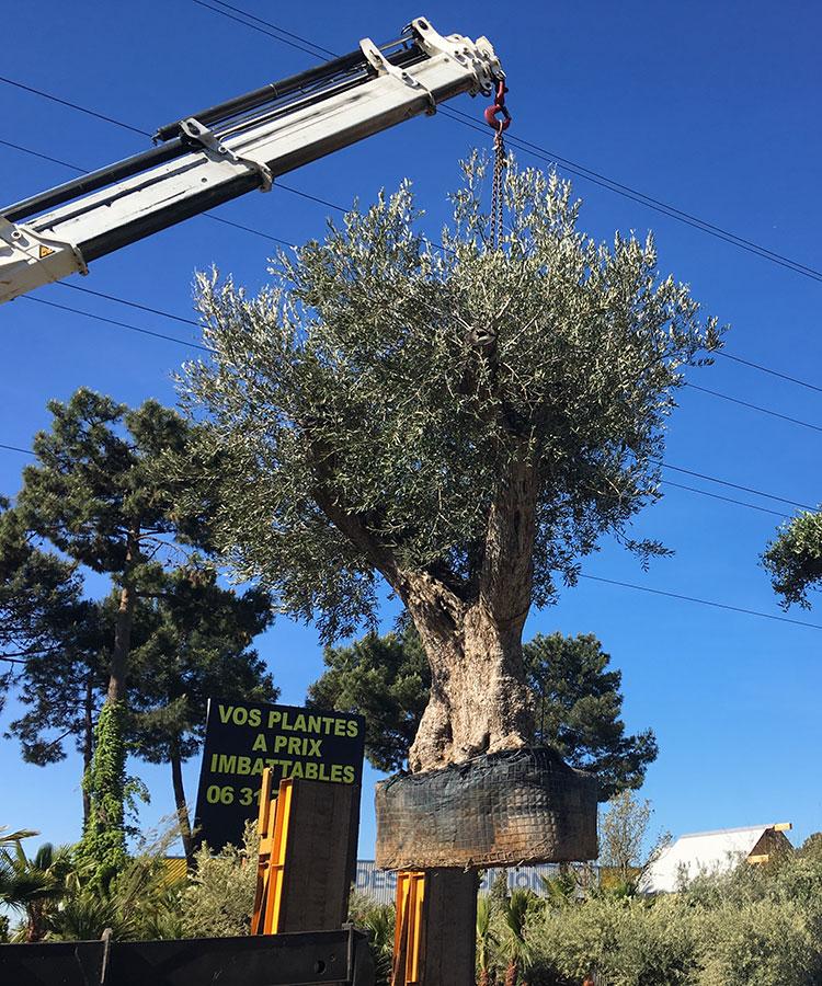 transport-olivier-Arcachon