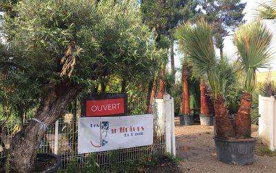 Les palmiers sont de retour au bassin d'Arcachon!