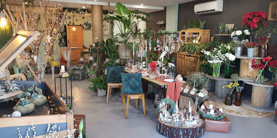 cadeau-symbolique-plante