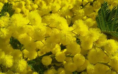 Obtenir un jardin fleuri même en hiver, c'est possible !