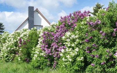 Opter pour des plantes qui poussent vite : bonne ou mauvaise idée ?